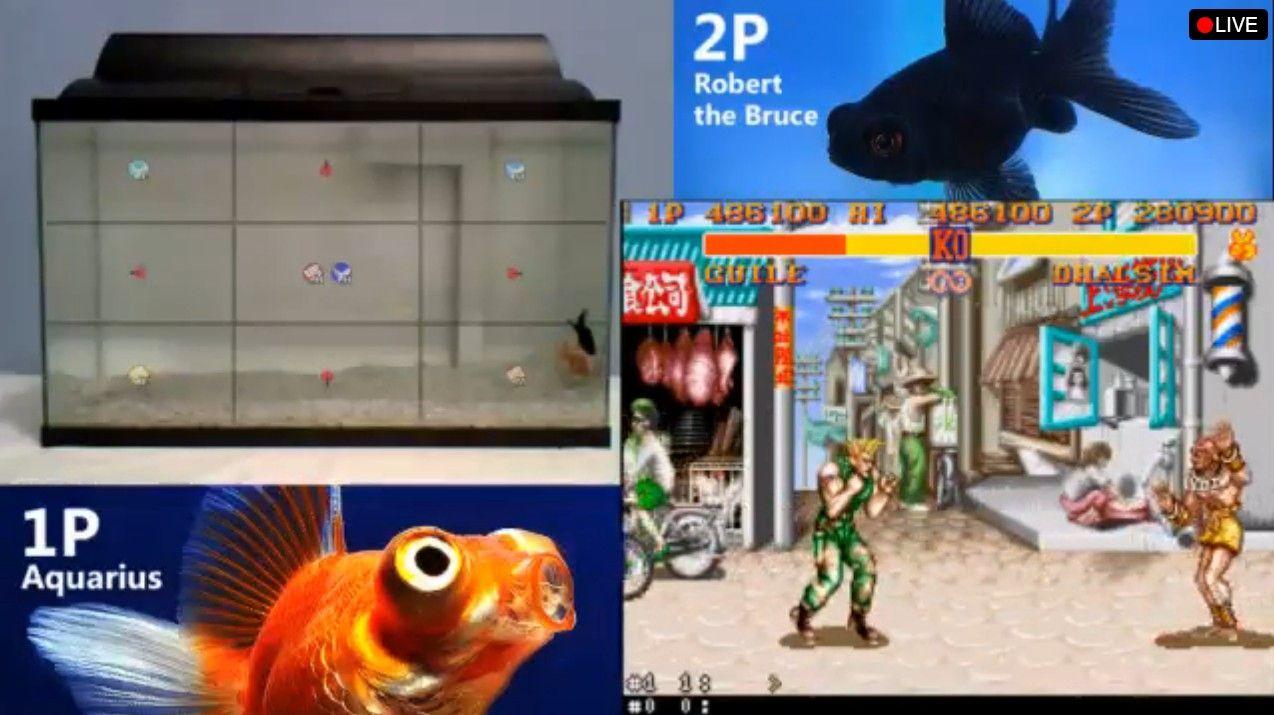 Street Fighter : la bataille des poissons